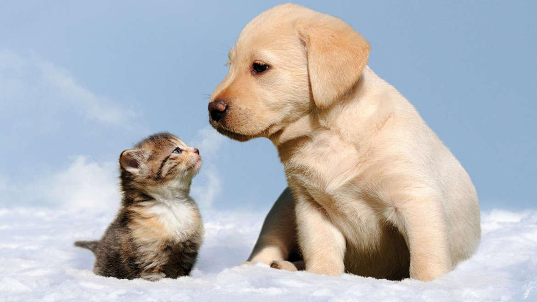 Veterinaria e Animali